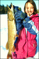 Ice Fishing Large Perch